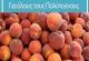 Δωρεάν Ροδάκινα για Πολύτεκνους έως τέλος Σεπτεμβρίου - Διανομή ροδάκινων