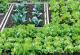 Δημοτικοί Λαχανόκηποι, Αιτήσεις Καλαμάτα, Δωρεάν Καλλιέργεια