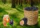 Δωρεάν Αγροτικά Σεμινάρια Φυτά, Τρούφα, Μέλι, Κοσμήματα, Ήπειρος